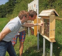 Visiting the colony of bees is interesting for children and adults.