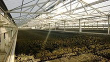 Eco-friendly reduction of disposal costs – sludge drying in a greenhouse